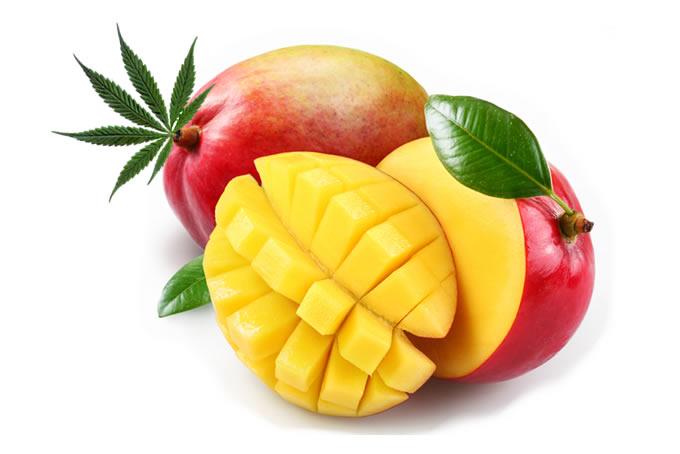 Mango Marihuana